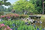 1000ピース ジグソーパズル めざせ! パズルの達人 彩りの季節 兼六園―石川(50x75cm)