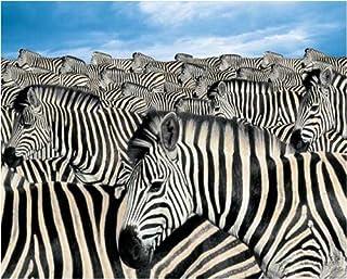Springbok Zebra Herd 2000 Piece Jigsaw Puzzle