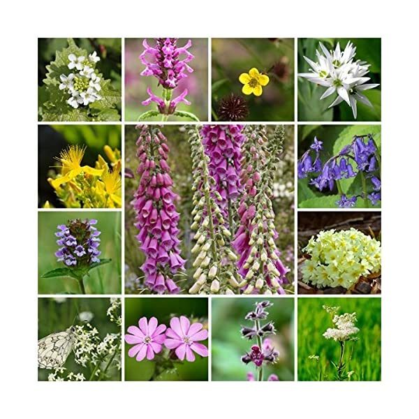 RP Seeds Wildflower Seeds - Woodland & Shade Mix - 2g. 24 Native British Perennial Species. All Seed Bred in The UK.