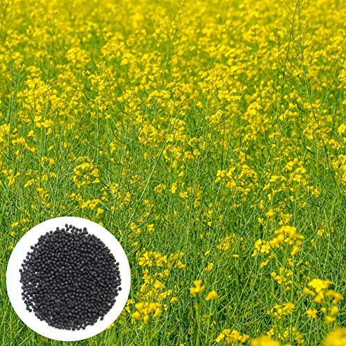 Gemüse Samen100Pcs/Bag Raps Blumen Samen natürliche Hitze tolerant schnell wachsende Gartenarbeit Geschenk Raps Blumen Samen für Balkon - Raps blüten Samen