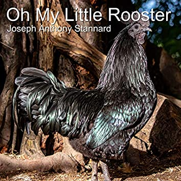 Oh My Little Rooster