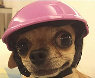 Best chihuahua with helmet Reviews