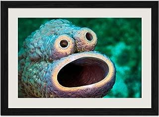 Interesting Marine Life - Art Print Wall Black Wood Grain Framed Picture(24x16inch)