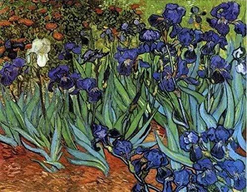 Malen nach Zahlen für Erwachsene von Banlana, DIY Erwachsene Malen nach Zahlen Kits für Anfänger auf Leinwand gerollt 40,6 x 50,8 cm (Van Gogh Iris im Garten, rahmenlos)
