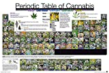 Periodic Table - Cannabis - Hanf Fun Poster Druck - Größe