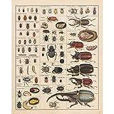 Meishe Art Jahrgang Plakate Drucken Insekten Sammlung Arten