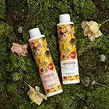 Zoom IMG-2 jean len filosophie shampoo lucido