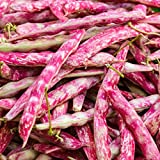 TomorrowSeeds - Pink Cranberry Bean Seeds (Bush) - 20+ Count Packet - Organic Non GMO Garden Vegetable Fruit Herb Flower Plant Seed for 2021