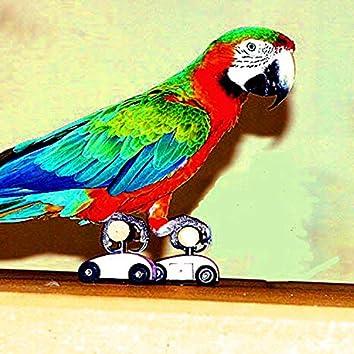 Roller Rink Bossa