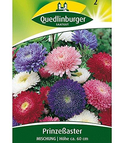 Quedlinburger Riesen-Prinzess-Astern-Mix, 1 Tüte Samen