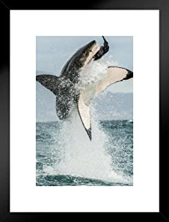 Poster Foundry Great White Shark Jumping Out of Water Action Photo Matted Framed Art Print Wall Decor 20x26 inch