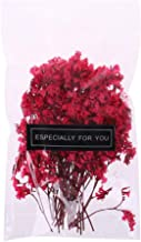 MEIYIN 1 Bag Real Pressed Dried Flowers Floral Plants Embellishments for DIY Scrapbooking Card Making Art Craft Decoration