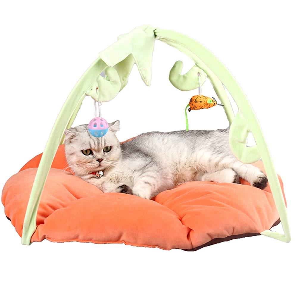 ZuckerTi - Cuna para Gatos, Cesta, Cesta, Gatos, Gatos, Juguete Interactivo para Gatos, Caja con Juguetes Individuales: Amazon.es: Productos para mascotas