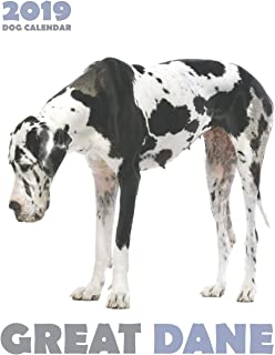 Great Dane 2019 Dog Calendar