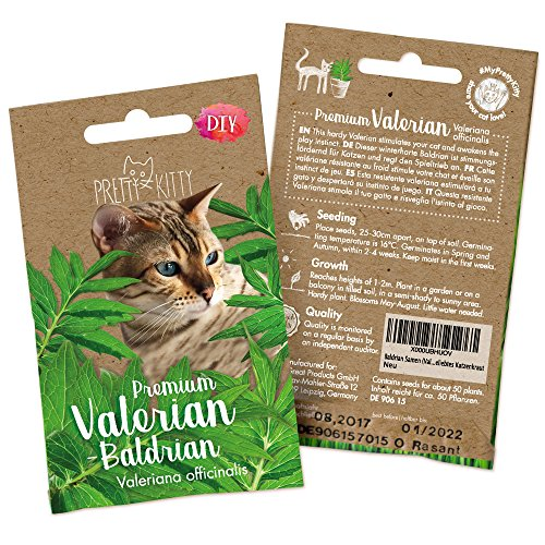 PRETTY KITTY Baldrian Katze Samen: 250 Baldrian Samen (Valeriana officinalis) - Echter Baldrian für Katzen fördert den Spieltrieb - Premium Baldrian Saatgut, Winterhart - Geschenk Katzenliebhaber