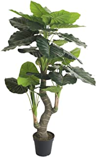 AMERIQUE Green 5.5 Feet Hawaiian Punch Elephant Ear Colocasia Artificial Plant with Giant Striking Leaves, UV Protection, Pre Nursery Pot, Feel Real Technology