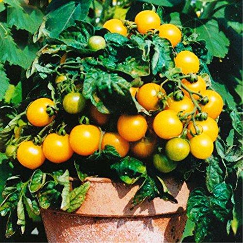 200 pcs/sac graines de tomates bonsaï, délicieuses graines de tomates cerises, graines non-OGM légumes balcon comestible plantes en pot de jardin 1
