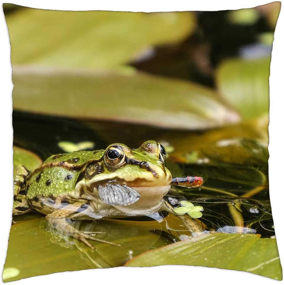 LESGAULEST Throw Pillow Cover 24x24 inch - Water Frog Pond Challenge the lowest price of Japan Gre Be super welcome