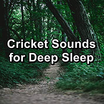 Cricket Sounds for Deep Sleep