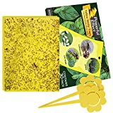 Kensizer 30-Pack Dual-Sided Yellow Sticky Gnat Traps for Indoor/Outdoor Flying Plant Insect Like Fungus Gnats, Whiteflies, Aphids, Leaf Miners, Thrips, Other Flying Plant Insects - 6x8 Inches