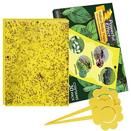 Kensizer 30Pack DualSided Yellow Sticky Gnat Traps for Indoor/Outdoor Flying Plant Insect Like Fungus Gnats Whiteflies Aphids Leaf Miners Thrips Other Flying Plant Insects  6x8 Inches