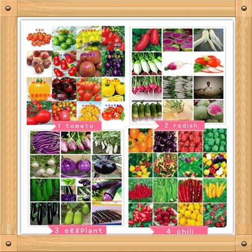 Kit de 700 graines de quatre types de légumes et fruits pour mini jardin Jardin coloré avec graines de radis, aubergines, poivrons et tomates.