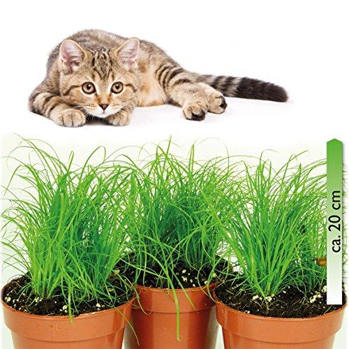 mgc24 - Zimmerpflanzen in Grün, Größe 3 Stück
