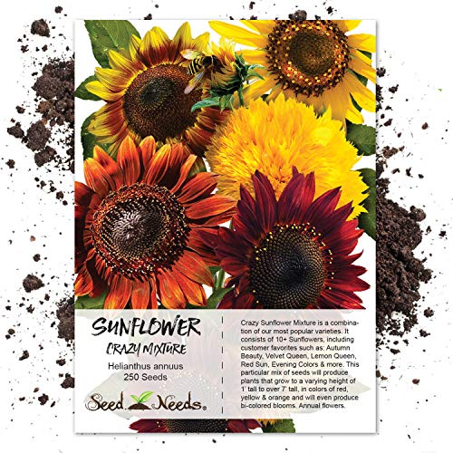 Seed Needs, Sunflower Crazy Mixture (15+ Varieties) 250 Seeds