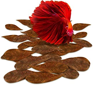 SunGrow Mini Catappa Indian Almond Leaves For Betta, 2 Inches, Promotes Breeding, Lowers Your Tank'S Ph, Decreases Stress ...