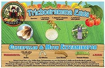Bug Sales Caterpillar & Moth Exterminator- Trichogramma 3 Squares/ 12,000 Eggs
