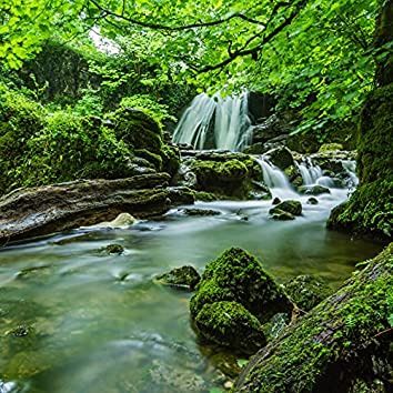 Forest Sounds for Relaxation   Instant Relax