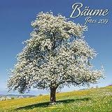 Bäume (BK) 224119 2019: Broschürenkalender mit Ferienterminen. Natur und Landschaft. 30 x 30 cm - Wandkalender
