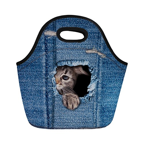 Nopersonality Cute isolée Impression Pretty Cat Sac à déjeuner thermique Nourriture étui de transport, Cat Pattern2, Taille M