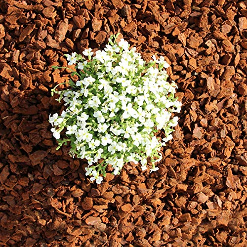 Terra-Discount Premium Pinie 120 Liter (2 x 60 Liter) grob, Körnung 10-25 mm, Pinienrinde, Pinienborke, dekorativer Bodenbelag