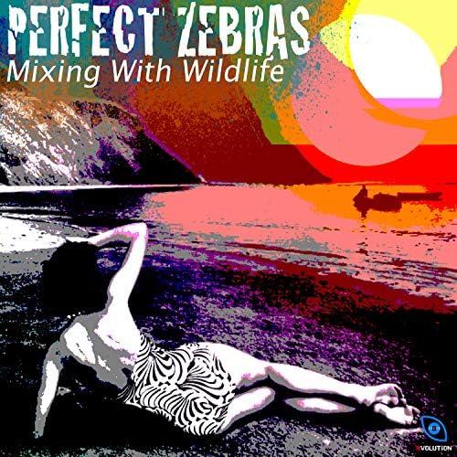 Perfect Zebras