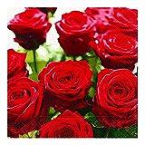 20 Serviettes splendid herrliche roses et fleurs roses 33 x 33 cm