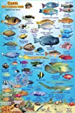 "Guam Coral Reef Creatures Guide Franko Maps Laminated Fish Card 4"""" x 6"""