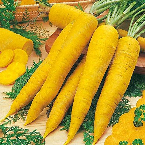 500pcs ronde carotte Productives Sweet Seeds carotte Graines Bonsai plantes Nutritif de fruits de légumes pour jardin Cour vert
