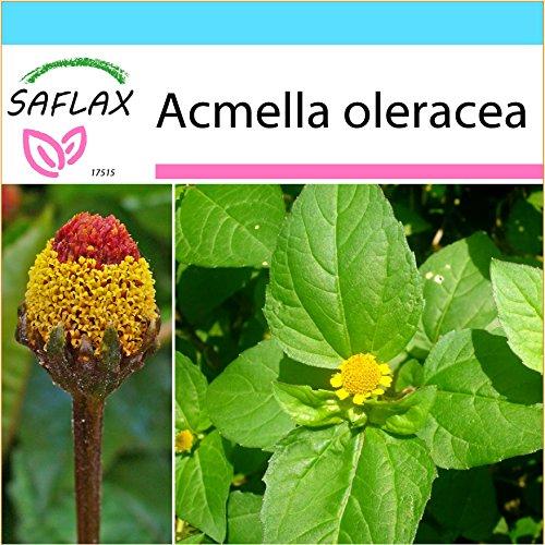 SAFLAX - Geschenk Set - Kräuter - Parakresse - 500 Samen - Mit Geschenk- / Versandbox, Versandaufkleber, Geschenkkarte und Anzuchtsubstrat - Acmella oleracea