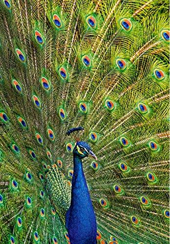alles-meine.de GmbH Puzzle 1000 Teile - Blauer Pfau - Vogel Fasan - Tierpuzzle Ziervogel Vögel Zootiere aus Indien / Sri Lanka blau Asien
