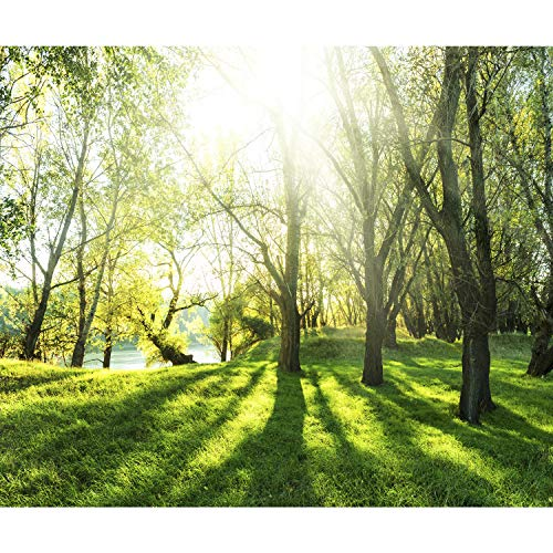 decomonkey Fototapete Wald 300x210 cm XL Tapete Wandbild Bild Fototapeten Tapeten Wandtapete Wandtapeten Natur Landschaft Baum
