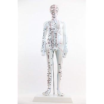 人体模型 鍼灸経穴人形 新穴奇穴 48cm 女性 最新モデル 刺鍼練習