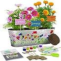Dan&Darci Paint & Plant Flower Growing Kit for Kids