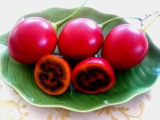 Verazui Tamarillo, (Tree Tomato), Cyphomandra betacea, Tree 30 Seeds (Edible, Fast, Showy)