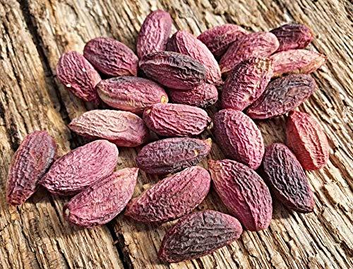 10 frische, echte Pistazien Samen, Pistacia vera, Bio Saatgut, frosthart, Ernte Oktober 2020
