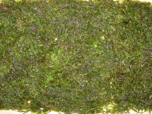 Aquariumpflanzen Vesicularia dubyana - Javamoos, Wasserpflanzen