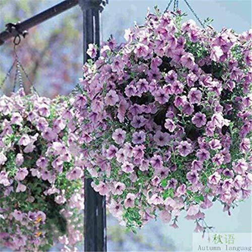 JJ.Accessory - Semi di petunia perenni in vaso, per decorazione fai da te, casa, giardino, scrivania, 50 pezzi