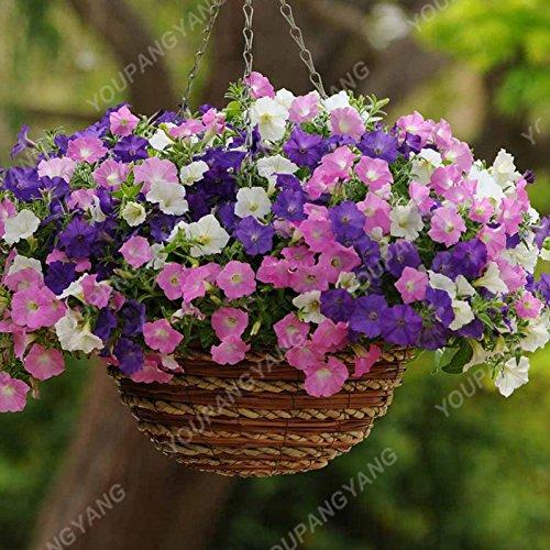 100pcs/Paquet Bonsai Hanging Petunia Graines de couleurs mélangées Belle graines de fleurs Bonsai pot Bricolage & Jardin Livraison gratuite Blanc
