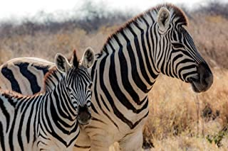 Jigsaw Puzzle 300 Pieces Puzzles for Kids Zebras Mother Son at Etosha National Park in Namibia Africa Wooden Large Puzzle ...