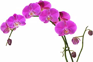Phalaenopsis orchids 20pcs seeds Beautiful garden Bonsai balcony flower butterfly orchid seeds Home Plant Seeds Brand New !